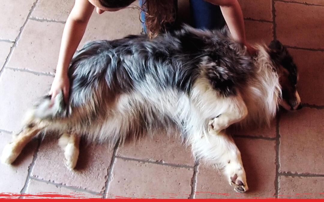 Dites-lui je t'aime avec un massage canin